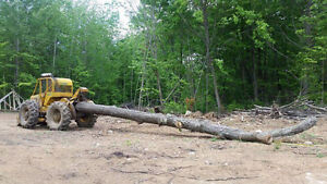 Turn your forest into money.  Looking for woodlots for Firewood