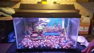 Fish tank and all accessories!