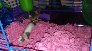 2 mice with cage