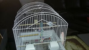 beautiful female budgie + cage and food +toys
