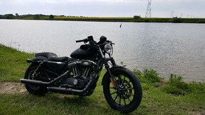 One Serious Sportster