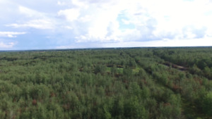 39.34 Acres of Trees, Open Space & a Well -Glaslyn-