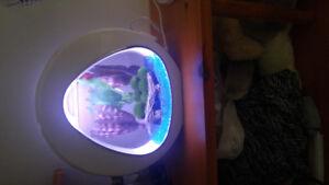 Petite aquarium
