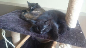 2 FREE kittens to a good home