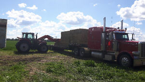 7000 square hay bales for Sale