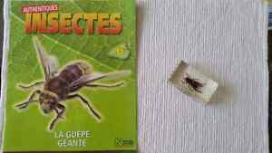 Collection d insectes Saguenay Saguenay-Lac-Saint-Jean image 7