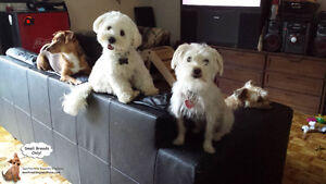 Daycare/Boarding small dogs NO CAGES EST 2010 West Island Greater Montréal image 2