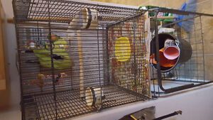2 lively lovebirds plus cage