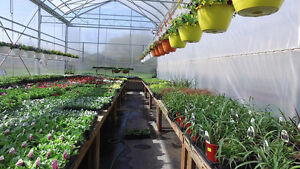 Greenhouse/Garden Centre For Sale in Killarney, Manitoba