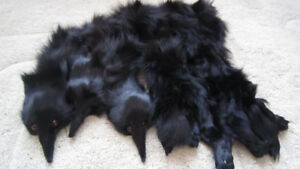 Genuine real fox fur black 3 pcs