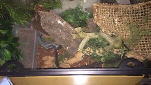 Large reptile tank