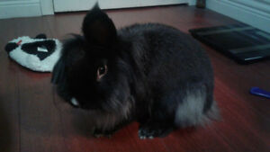 3 year old rabbit for rehoming