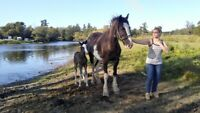 Horse,tack & Equip. Consignment auction sale Saturday, OCTOBER 7