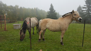 Great Home Wanted for 2 Horses
