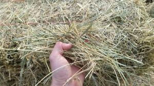 Hay for Sale - Square bales