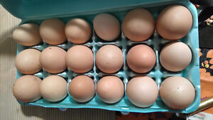 ALL NATURAL EGGS FOR SALE