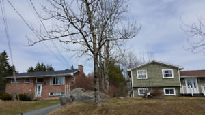 Tree Removal / Lot Clearing / Thinning