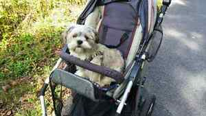 Doggie Dog Pet Stroller Zooper Boogie 3 Wheel Stroller Jogger Cornwall Ontario image 2