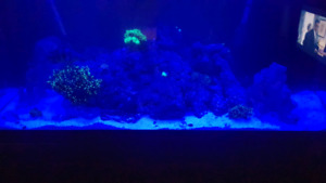 I'm looking for fish tank light
