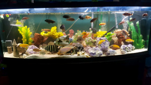 225 gallon bow fish tanks for sale
