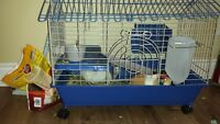 8 month old Guinea pigs
