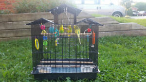 4 Budgies and a cage