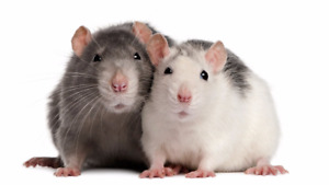 Frozen Rats and Rabbits for Feeders