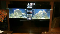 REDUCED-Custom 240 Gallon Saltwater Fish Tank