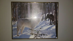"Assorted wolf pictures  pic 1 20"" x 16"" 2 wolves $15  pic 2 13'x"