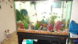 Looking to Rehome your fish??