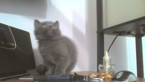 Chaton male a donner
