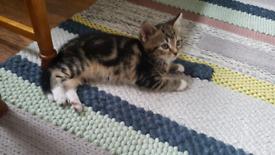 Playful little kittens needs a new home