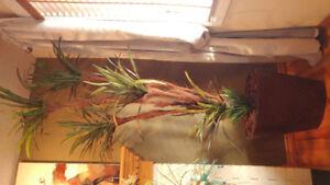 Silk Plant / 7.5 ' Yucca Tree