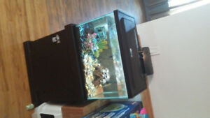 20 galloon fish tank with stand and fish.