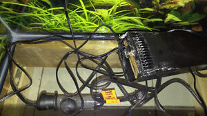 Complete set up with 2 Tanks 75g &10g Windsor Region Ontario image 4