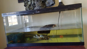 Red Eared Turtle and 55 gallon Tank