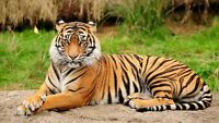 India Food & Tiger Adventure Hosted from Vancouver ON SALE!