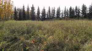 3.25 acres land  Strathcona County Edmonton Area image 3
