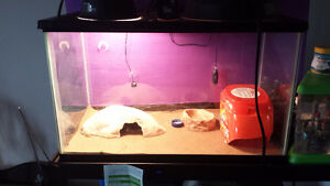 Leopard Gecko For Sale & Complete Setup