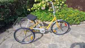 Tricycle pour adulte velo 3 roues