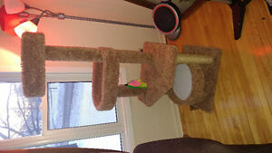 New cat tree from petsmart