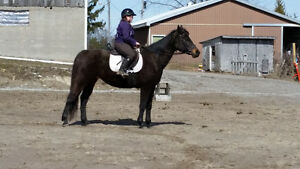 Apendix Mare For Sale