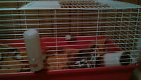 Guinea pig/cage for sale!