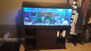 90 Gallon Fish Tank with Stand, Fish, Decor ect