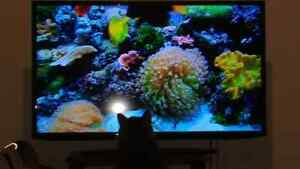"""Bell satellite system and 40"""" samsung tv"""