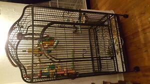 Énorme cage perroquet propre