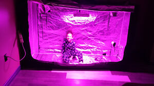 grow tent and led light Cambridge Kitchener Area image 1