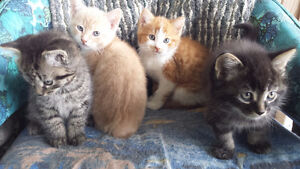 CHATONS A ADOPTER