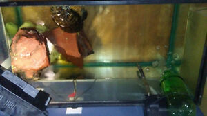 Red eared slider with 50 gallon tank