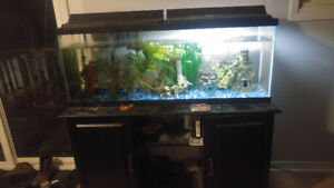50 Gallon Fish Tank With Stand